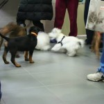 Puppy Party 2014