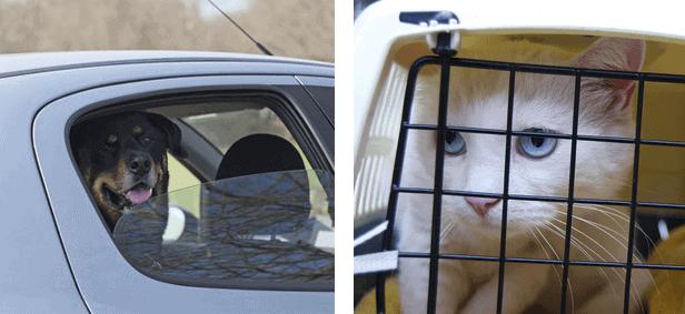 ¿Se marea tu mascota en los viajes?