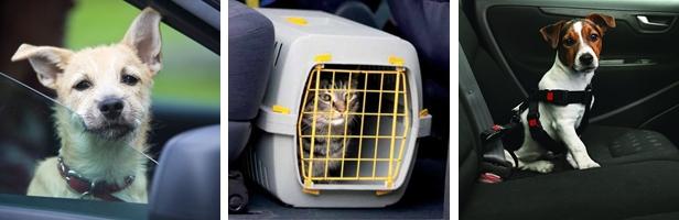 Viajar: Normativa sobre retenciones para mascotas