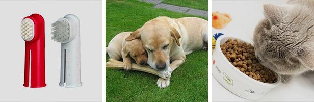 En la higiene dental de tu perro, recuerda utilizar productos específicos