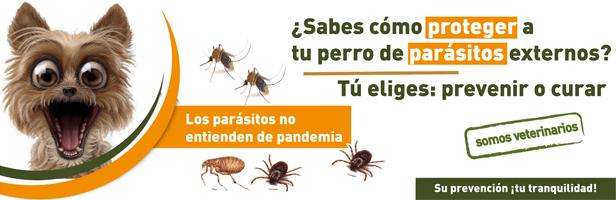 Campaña Prevención PARÁSITOS EXTERNOS